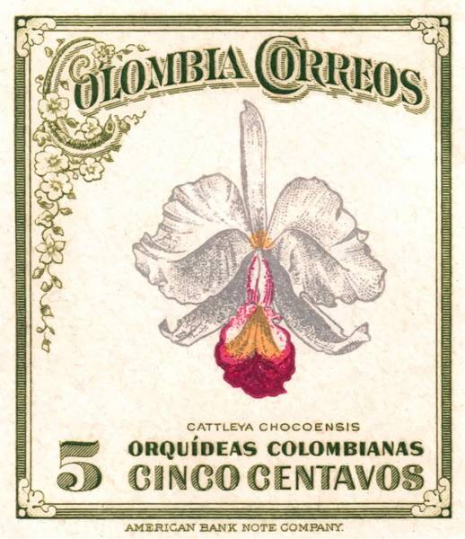 Orchid Digital Art - 1947 Colombia Cattleya Chocoensisi Orchid Stamp by Retro Graphics