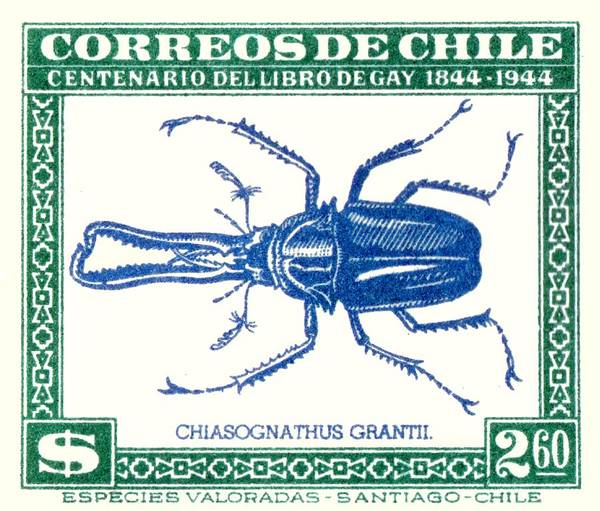 Fauna Digital Art - 1948 Chile Stag Beetle Postage Stamp by Retro Graphics