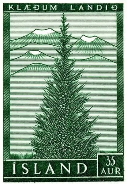 Cultivation Digital Art - 1957 Iceland Spruce Tree Postage Stamp by Retro Graphics