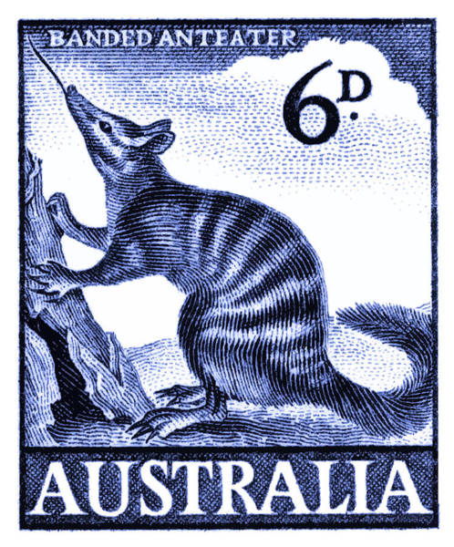 Fauna Digital Art - 1959 Australia Banded Anteater Postage Stamp by Retro Graphics