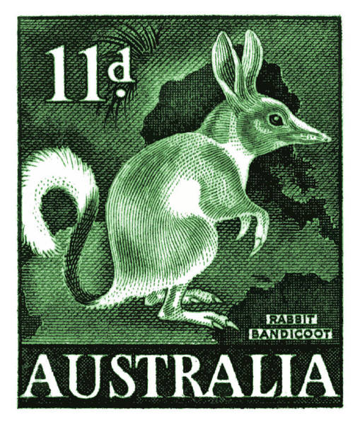 Fauna Digital Art - 1959 Australia Bandicoot Postage Stamp  by Retro Graphics