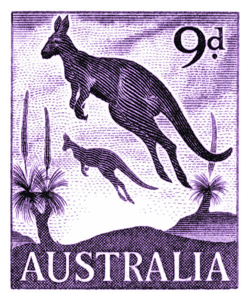 Fauna Digital Art - 1959 Australia Kangaroo Postage Stamp by Retro Graphics