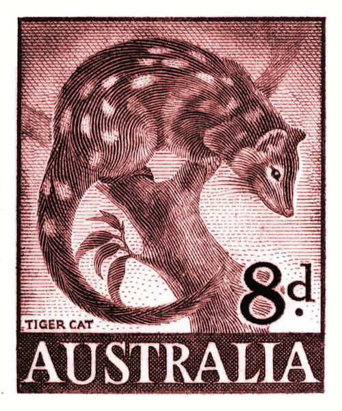 Spots Digital Art - 1959 Australia Tiger Cat Postage Stamp  by Retro Graphics