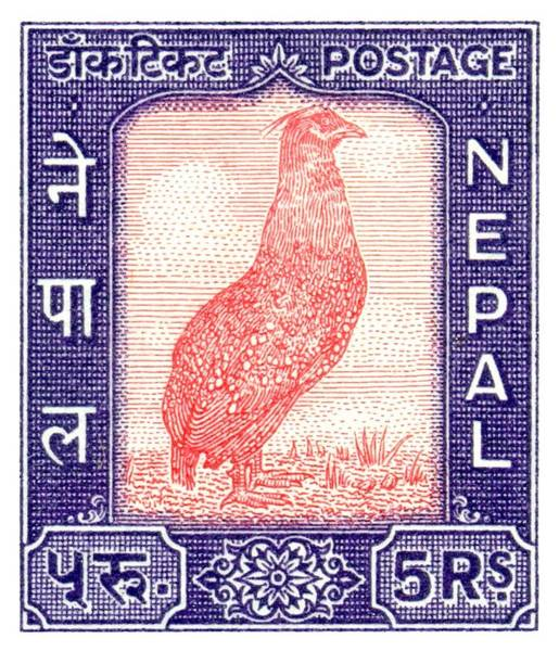 Wall Art - Digital Art - 1960 Nepal Satyr Tragopan Postage Stamp by Retro Graphics
