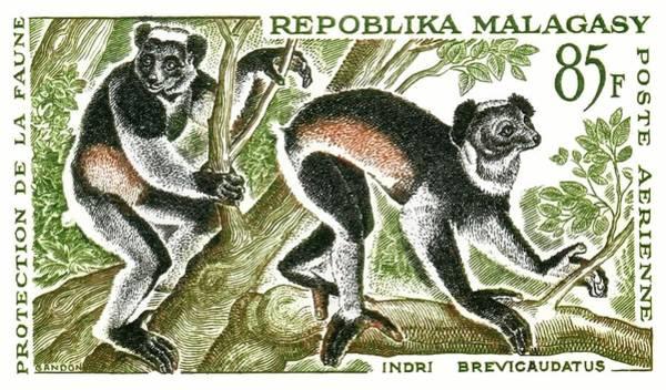 Lemur Wall Art - Digital Art - 1961 Madagascar Indri Lemur Postage Stamp by Retro Graphics