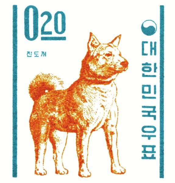 Wall Art - Digital Art - 1962 Korea Jindo Dog Postage Stamp by Retro Graphics