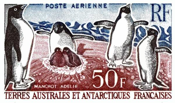 Fauna Digital Art - 1963 Fsat Adelie Penguins Postage Stamp by Retro Graphics