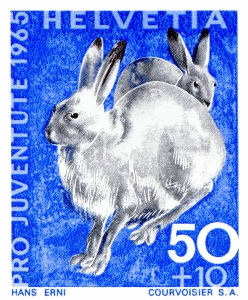 Tundra Wall Art - Digital Art - 1965 Switzerland Alpine Hare Postage Stamp by Retro Graphics