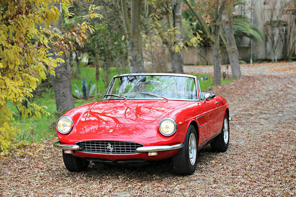 Photograph - 1967 Ferrari 330 G T S by Steve Natale