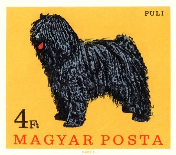 Wall Art - Digital Art - 1967 Hungary Puli Dog Postage Stamp by Retro Graphics