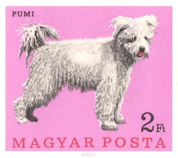 Wall Art - Digital Art - 1967 Hungary Pumi Dog Postage Stamp by Retro Graphics