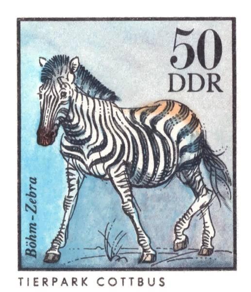 Wall Art - Digital Art - 1975 East Germany Zoo Zebra Postage Stamp by Retro Graphics