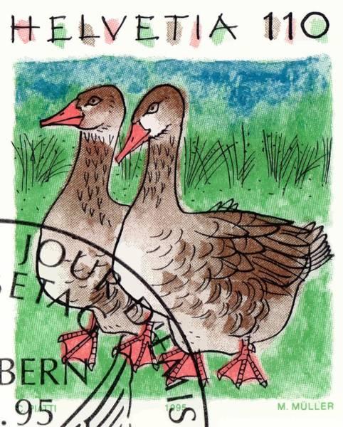 Goose Digital Art - 1995 Switzerland Geese Postage Stamp by Retro Graphics