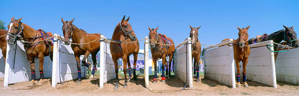 World Championship Photograph - 1998 World Polo Championship, Horses by Panoramic Images