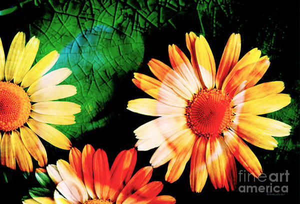Photograph - 19a Abstract Floral Digital Expressionism by Ricardos Creations