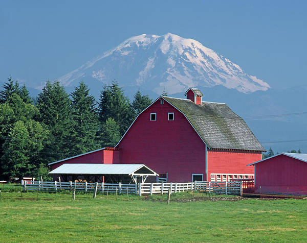 Photograph - 1a4411 Mt. Rainier Over Farmlands by Ed Cooper Photography