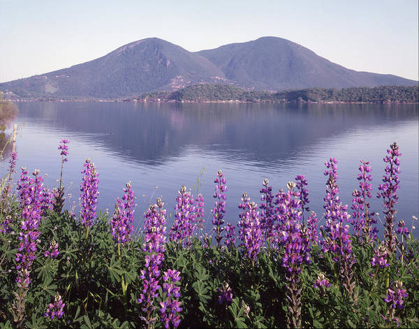 Photograph - 1a6345 Mt. Konocti Reflect Ca by Ed Cooper Photography