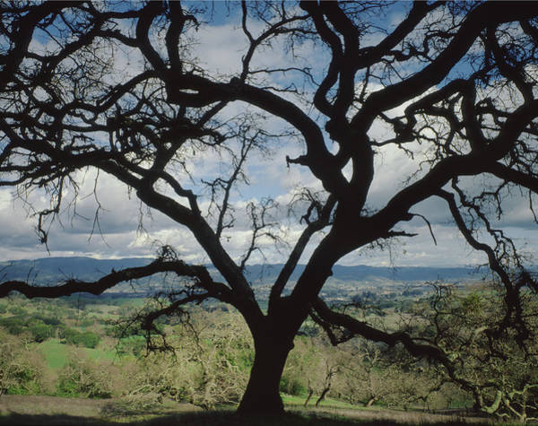 Photograph - 1b6360 Sonoma Valley Behind Oak by Ed Cooper Photography