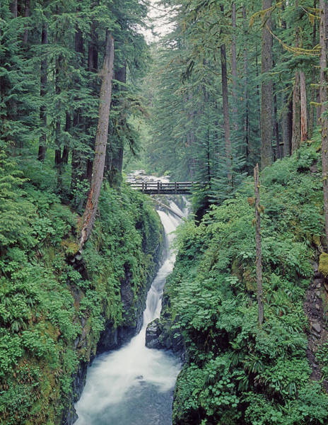 Photograph - 1m4075 Sol Duc Falls Wa by Ed Cooper Photography
