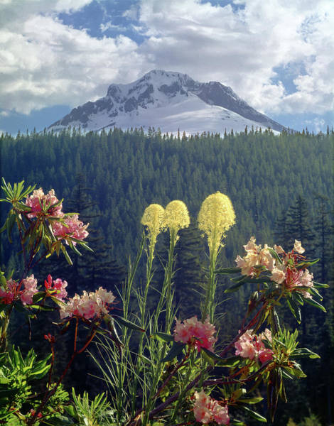 Photograph - 1m5101 Flowers And Mt. Hood by Ed Cooper Photography