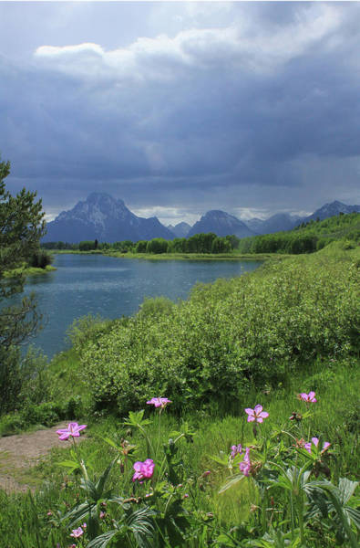 Photograph - 1m9236 Mt. Moran And Sticky Geranium by Ed Cooper Photography