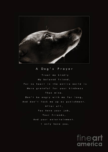 Photograph - A Dog's Prayer  A Popular Inspirational Portrait And Poem Featuring An Italian Greyhound Rescue by Angela Rath