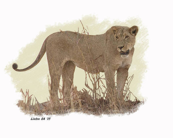 Digital Art - African Lioness by Larry Linton