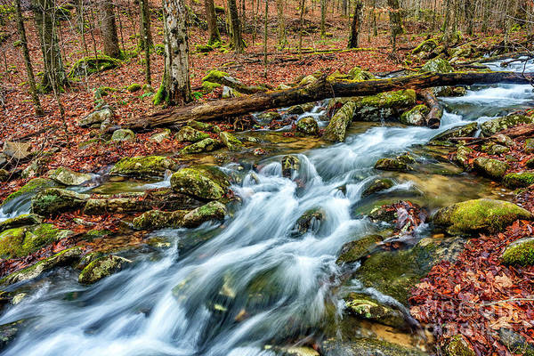 Photograph - Aldrich Branch Monongahela National Forest by Thomas R Fletcher