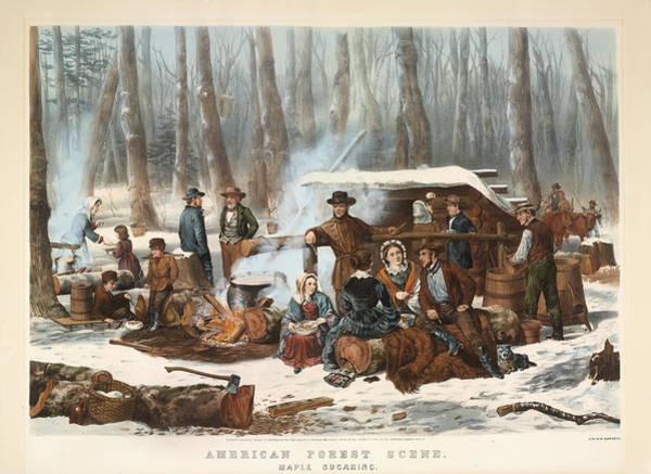 Maple Drawing - American Forest Scene. Maple Sugaring by Currier and Ives