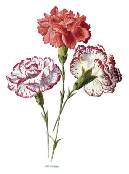 Circa Painting - amiliar Garden Flowers by Edward Hulme