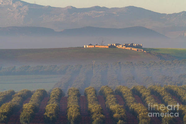 Photograph - Olive Fields In Morning Mists by Heiko Koehrer-Wagner