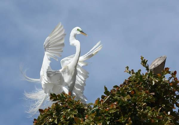 Photograph - Angel Wings by Fraida Gutovich