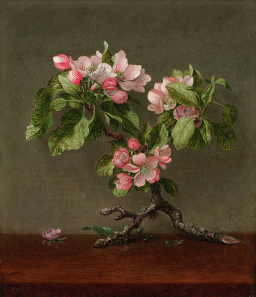 Fruit Trees Wall Art - Painting - Apple Blossoms by Martin Johnson Heade