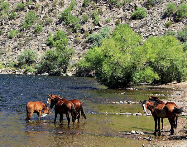 Photograph - Arizona Wild Horses by Matalyn Gardner