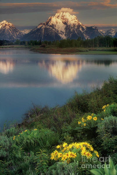 Photograph - Arrowleaf Balsamroot Grand Tetons National Park Wyoming by Dave Welling
