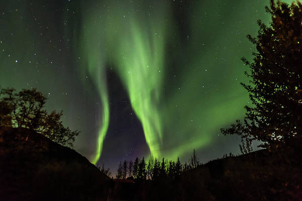 Photograph - Aurora Borealis, Northern Lights In Denali National Park by Brenda Jacobs