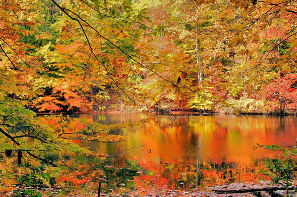Photograph - Autumn Reflections by Kristin Elmquist