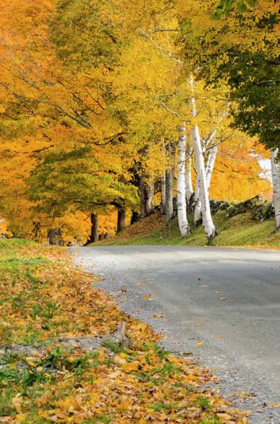 Photograph - Autumn Road by Tom Singleton