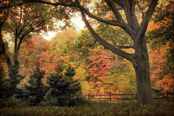 Photograph - Autumn Woodland by Jessica Jenney