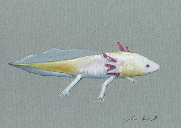 Wall Art - Painting - Axolotl by Juan Bosco