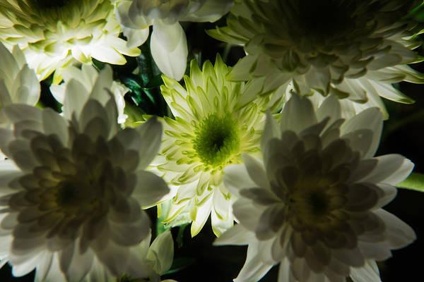 Photograph - Backlit White Dahlia by Dennis Dame