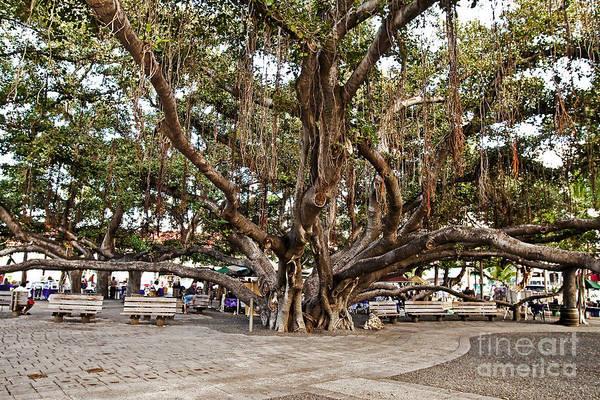 Polynesian Photograph - Banyan Tree by Scott Pellegrin