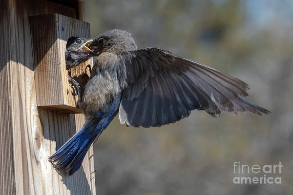 Wall Art - Photograph - Beak To Beak by Mike Dawson
