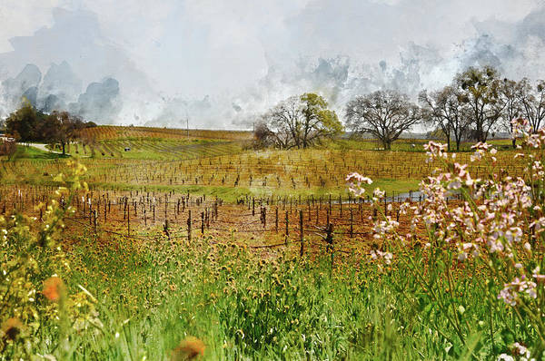 Photograph - Beautiful California Vineyard Framed With Flowers by Brandon Bourdages