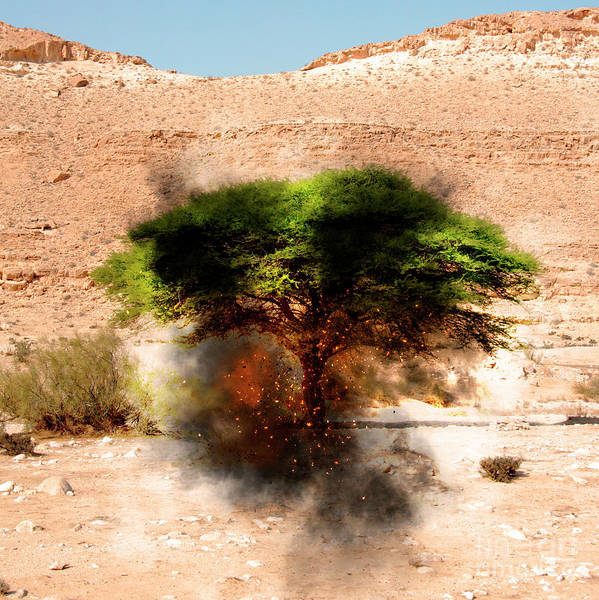 Bible Quotes Photograph - Biblical Burning Bush by Humourous Quotes