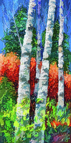 Painting - Birch Trees  by OLena Art Brand