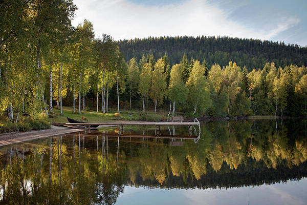 Photograph - Birches And Reflection by Aivar Mikko