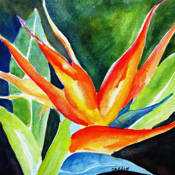 Wall Art - Painting - Bird Of Paradise  by Carlin Blahnik CarlinArtWatercolor