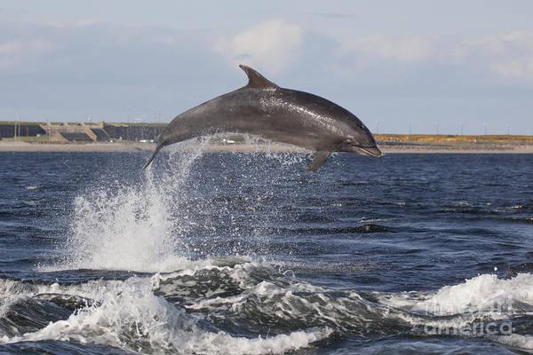 Photograph - Bottlenose Dolphin - Scotland #16 by Karen Van Der Zijden