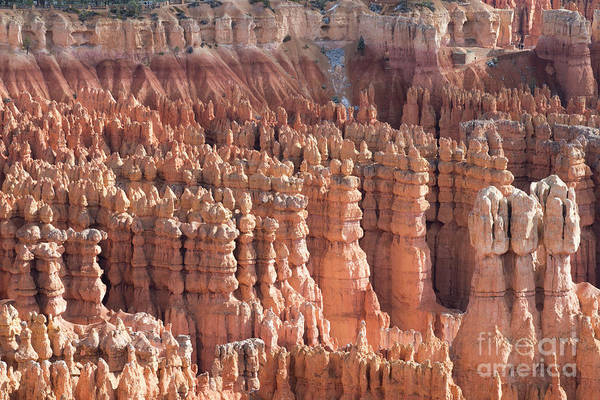 Geologic Formation Photograph - Bryce Canyon by Juli Scalzi